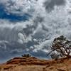 Pinyon Pine, Wild Sky - Canyonlands National Park 2011