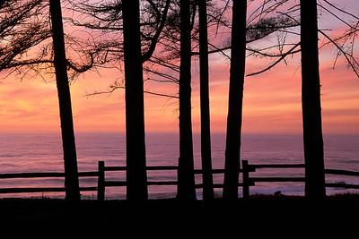 Sunset Silhouettes LOC11C