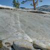 Jeffrey Pine - Ohlmstead Point - Yosemite National Park