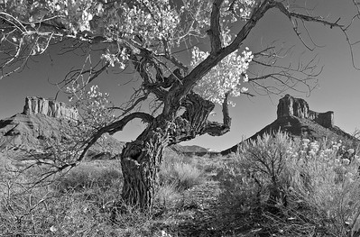 Dancing Cottonwood - Professor Valley, Utah