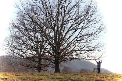 PJ Tree 6