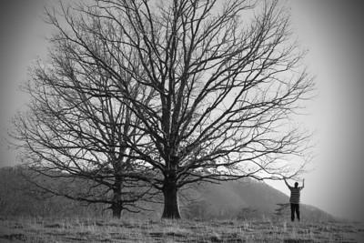 PJ Tree 6BW2
