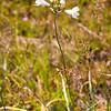 4  G Flower