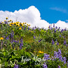 127  G Balsamroot and Lupine