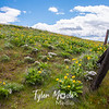93  G Balsamroot and Lupine Fence Wide