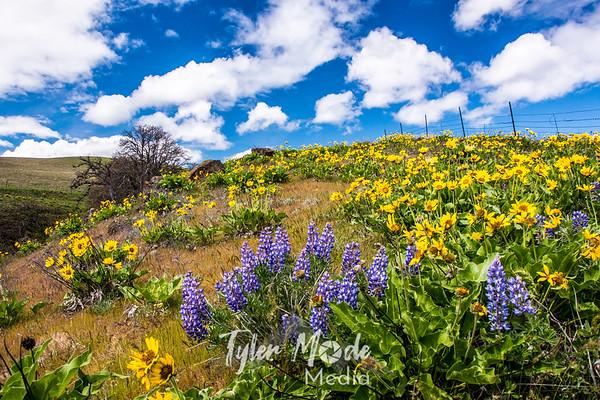 The Dalles Mountain Ranch 4.6.15