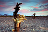 Desert Sunset - Quartzsite Arizona