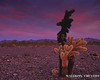 Desert Sunset, Quartzsite Arizona