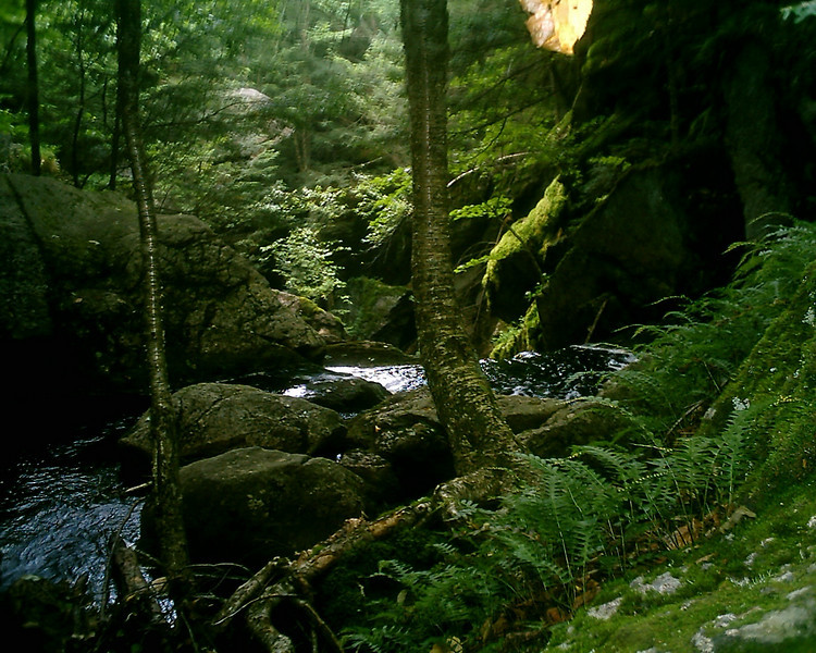 """Above Royalston Falls; """"Jungle Falls"""".<br /> <br /> Something happened with the light.  I don't know whether it was external or within the borrowed camera but it created this eerie, jungly image that contrasted pretty sharply with the neighboring one in this gallery."""
