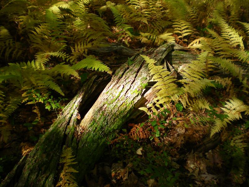 Delaney Wildlife Area, Harvard, MA, Oct '15