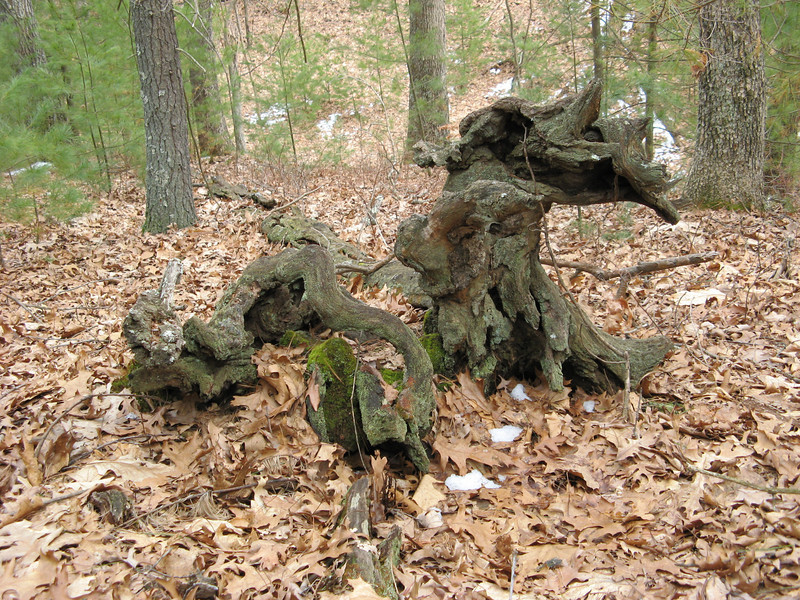 "The Creature.  Walden Woods, Lincoln, MA, 2007.  Seeing the way this dead tree stump took on ""life"" was probably the one moment that most turned me on to photography."