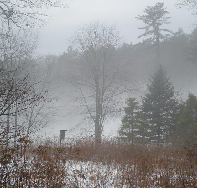 Twin Ponds Conservation Land, Weston/Lincoln, MA, Jan, '11