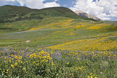Wildflower fields, Crested Butte, Colorado