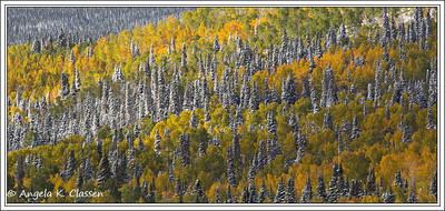 Frosted trees near Steamboat Springs, Colorado