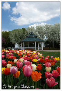 Tulip Time, Topeka, Kansas