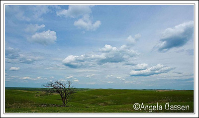 Flint Hills tree, Flint Hills near Alma, Kansas
