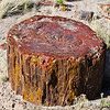 Petrified Tree trunk Section, not good for firewood