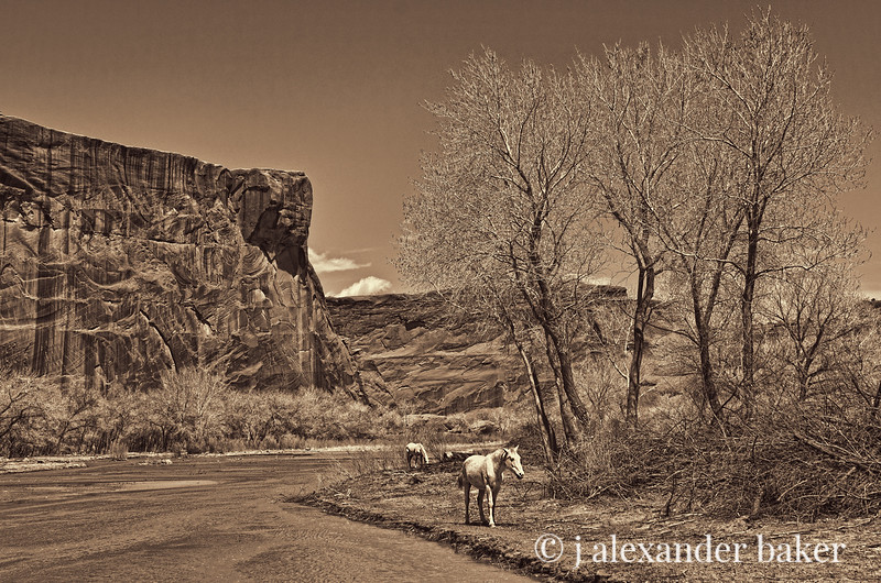 White Horses in Canyon De Chelly