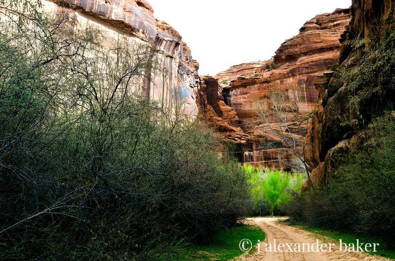 Spring Comes to the canyon