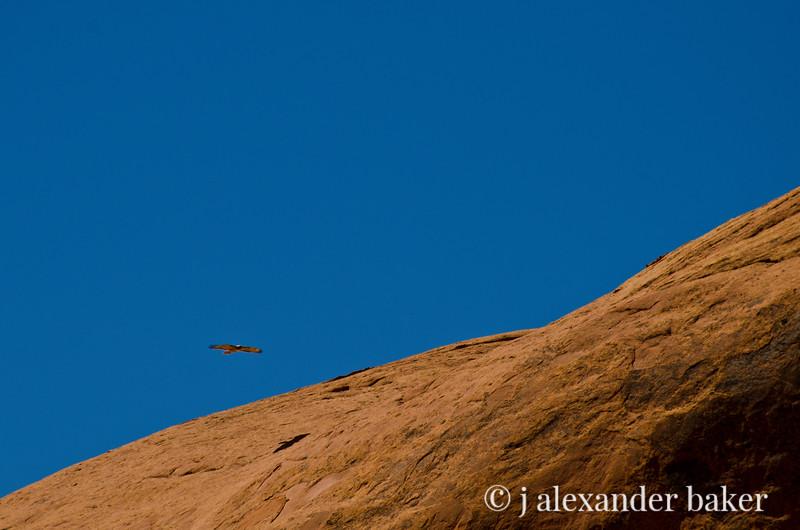 Hawk Shadow