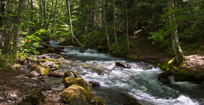 Sylvan creek in June