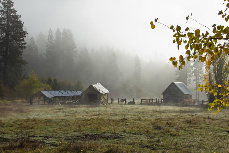 Fog and Farm Morning