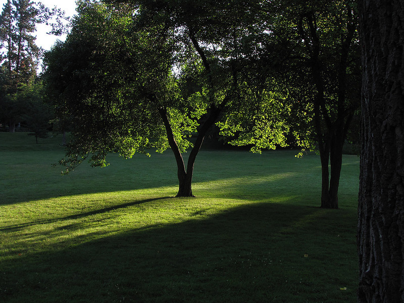 Early Summer Morning in the Park