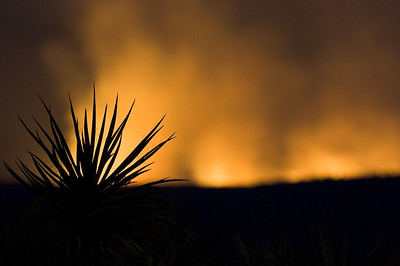 This was a sad night.  Many hundreds of acres of my beloved Red Rock State Park burned during this wild fire.