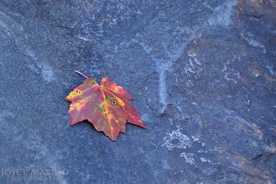 Fall.  #9667