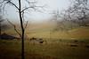 Last Fog 2013