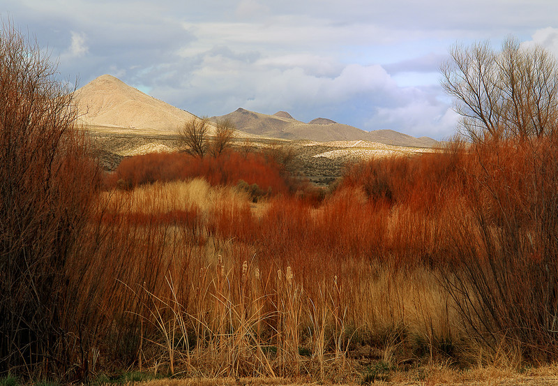 Bosque Del Apache, San Antonio, New Mexico
