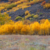 Cottonwood Glow, Eastern Sierra
