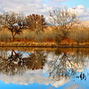 Bosque Del Apache Reflections, San Antonio, New Mexico