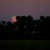 IMGP4440_20100725_Moon
