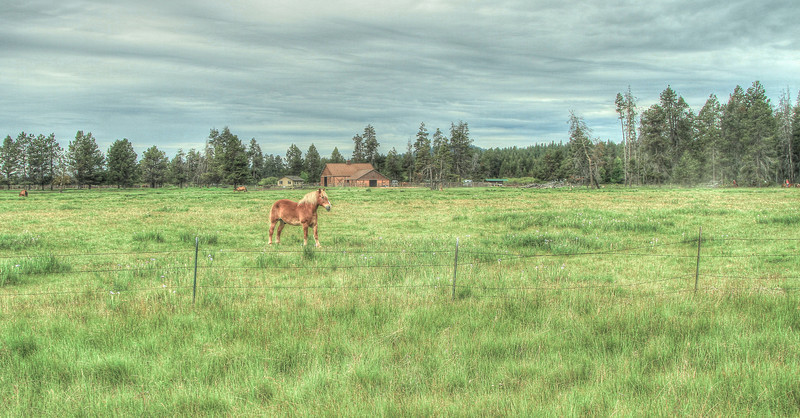 Sunriver Meadow