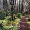17  G Leadbetter Trail Trees