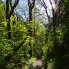 57  G Cape Perpetua Trail Sun V