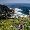 81  G Cape Perpetua and Flowers