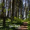 108  G Cape Perpetua Trail