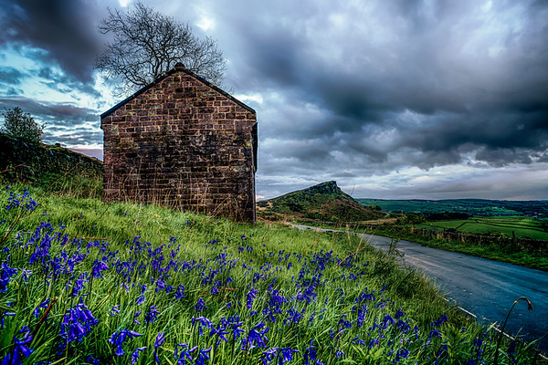 Bluebells at the Barn at the Roaches with Hen Cloud in the Distance