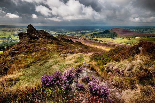 Heather at Ramshaw Rocks and Hen Cloud