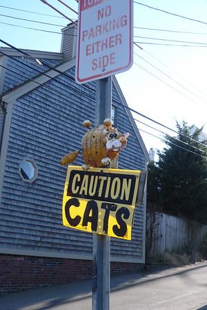 Caution Cats