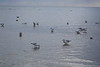 Provincetown Birds