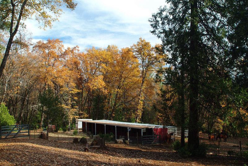 Horse Stalls in November