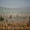 Calamus_Deer_9S7O7659