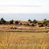 Sand Hills_Horses_9S7O7661
