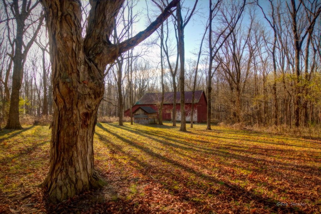 Historic Barnyard