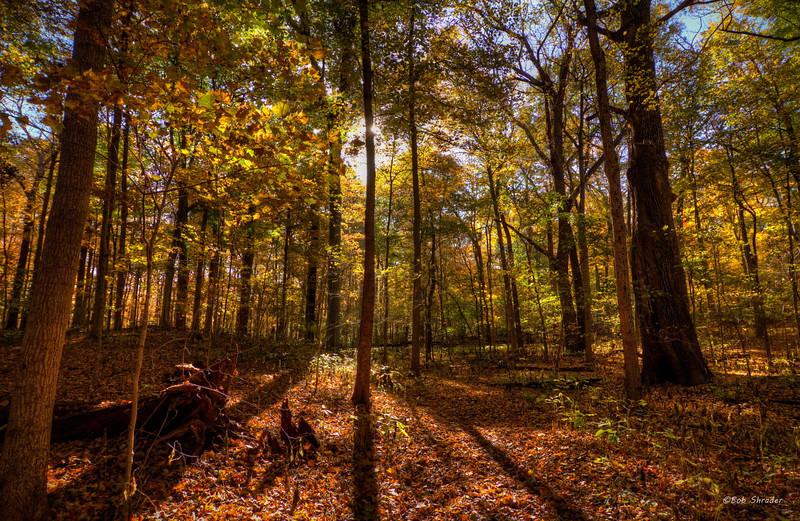 Early fall.