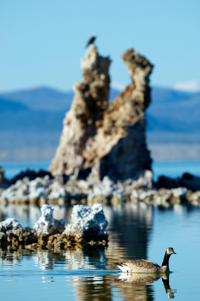 Mono Lake, tufa formations, osprey