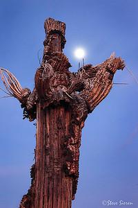 The Scare Crow Saguaro Skeleton and almost full mooon Sonoran Desert, Arizona